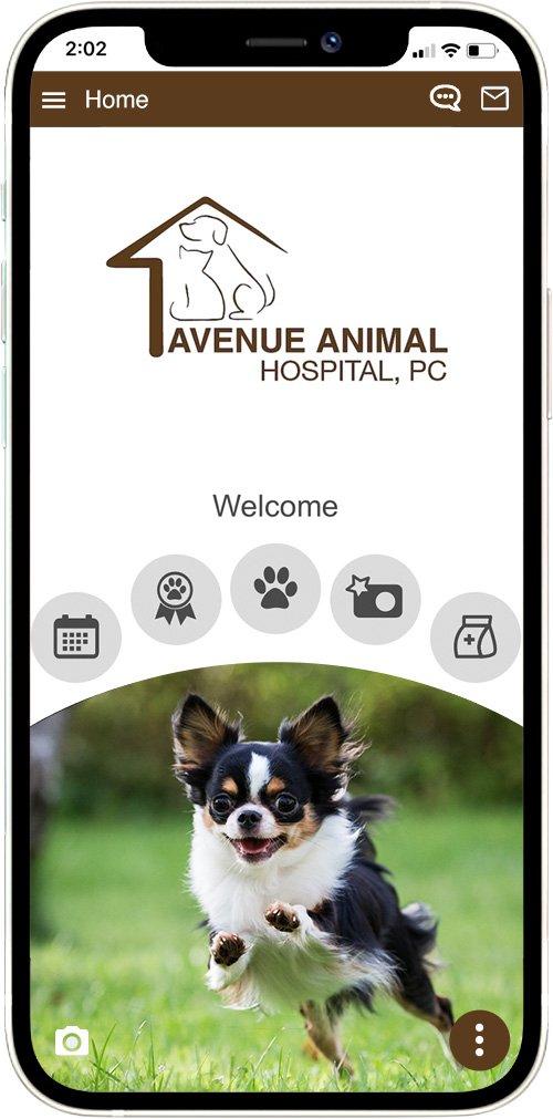 Avenue Animal Hospital