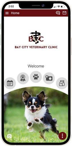 Bay City Vet and Equine